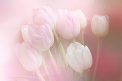 春天开花横幅-束在甜背景的桃红色郁金香花 库存图片