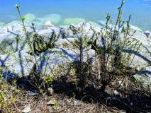春天开花的季节湖江边足迹自然加拿大 免版税库存图片