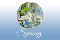 春天开花的樱桃 免版税库存照片