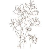 春天开花的花束 库存照片