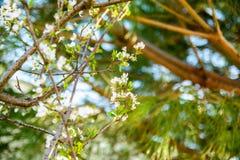 春天开花背景 与开花的树的美好的自然场面 晴朗的日 下雨 被弄脏的摘要 免版税库存照片