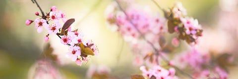 春天开花背景 免版税库存照片