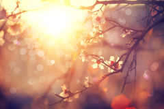 春天开花背景 库存照片