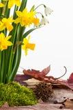 春天开花,青苔和干叶子 免版税图库摄影