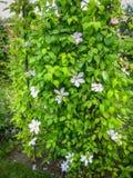 春天开花, Palekh,弗拉基米尔地区,俄罗斯 图库摄影