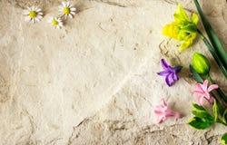春天开花3月8日在石背景的 免版税图库摄影