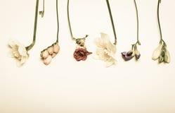 春天开花-水仙,小苍兰,在白色背景中 免版税库存照片