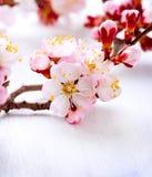 春天开花 免版税库存图片