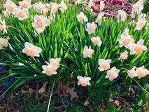 春天开花 图库摄影