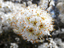 春天开花 库存图片