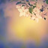 春天开花background_10 库存照片