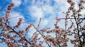 春天很快来临 免版税图库摄影