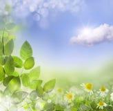 春天或夏天抽象背景与bokeh点燃。 库存照片