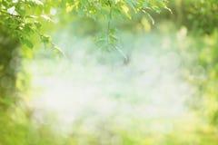 春天或夏天本质背景 免版税库存图片