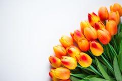 春天或夏天概念-接近郁金香开花与拷贝s 库存照片
