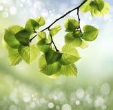 春天或夏天热摘要 免版税库存照片