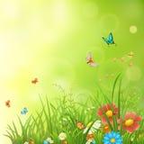 春天或夏天绿色背景 免版税库存图片