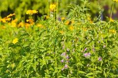春天或夏天背景与美丽的黄色花 库存图片
