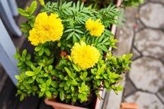 春天或夏天背景与美丽的黄色花 免版税库存图片