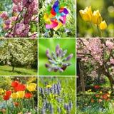 春天拼贴画 库存照片