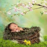 春天新出生的婴孩 免版税库存图片