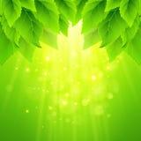 春天新鲜的绿色叶子 也corel凹道例证向量 库存照片
