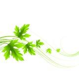 春天新鲜的绿色叶子 也corel凹道例证向量 库存图片