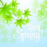春天新鲜的绿色叶子 也corel凹道例证向量 免版税图库摄影