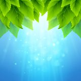 春天新鲜的绿色叶子 也corel凹道例证向量 免版税库存照片