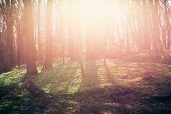春天日落在森林里 库存照片