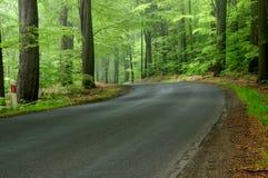 春天早晨在森林里 图库摄影