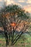 春天早晨风景 库存图片