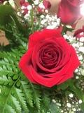 春天明亮的花束开花以一朵红色玫瑰为特色 免版税库存照片