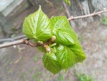 春天是诞生和更新 免版税库存图片