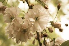 春天是以后的III 库存照片