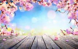 春天显示-桃红色开花 免版税库存照片