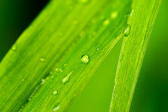 春天晚上雨在绿草留下很多小透明下落 免版税库存图片