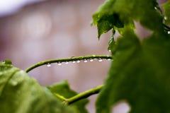 春天晚上雨,小透明下落在叶子,一个多层的大厦被反射 免版税库存图片