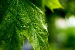 春天晚上雨,小透明下落在灰离开 库存图片