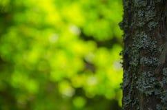 春天晴朗的森林风景 免版税库存照片