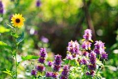 春天有拷贝空间的野花庭院 免版税图库摄影