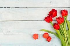 春天有红色郁金香背景 库存图片
