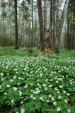 春天木头 库存照片