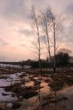 春天木头在晚上 库存图片