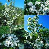 春天来与在天空的花! 免版税库存图片