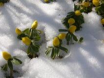 春天来了第一朵花 库存照片