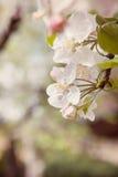 春天极乐  库存图片