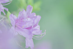 春天柔和的淡色彩花 库存图片