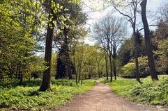 春天树和公园道路 库存图片
