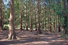 春天树和剪影沿公园道路 免版税库存图片